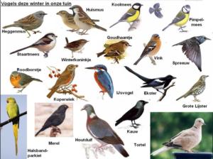 Tuinvogeltelling  Stadsboerderij Herweijershoeve @  Stadsboerderij de Herweijershoeve | Den Haag | Zuid-Holland | Nederland