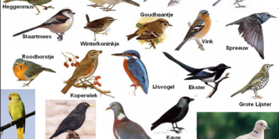 Tuinvogeltelling van vrijdag 25 tot 27 januari